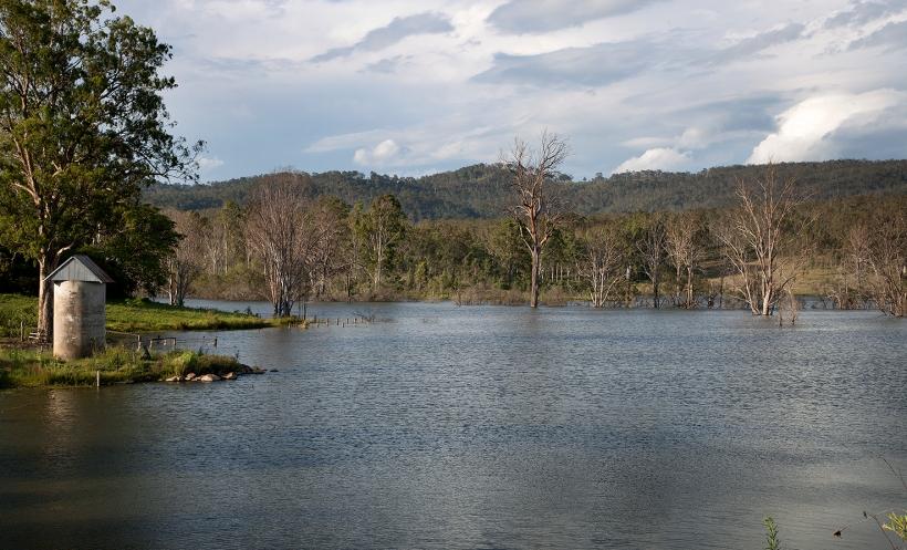 träd i vatten